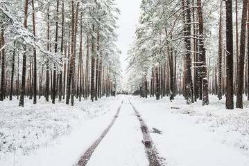 Walkway through the snow-covered pine forest on a cloudy winter day, Latvia