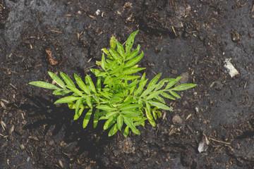 little green plant on soil