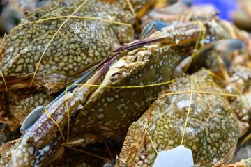 蟹・カニ・渡り・シーフード・魚介・海鮮