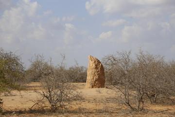 Rock in arid area