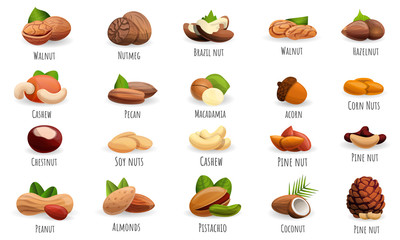 Nut icon set. Cartoon set of nut vector icons for web design