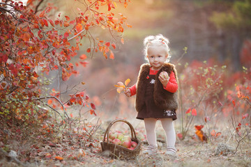 Child picking apples in autumn.Little baby girl playing in apple tree orchard.Kids pick fruit in a basket.Outdoor fun for children.Little girl with basket full of ripe apples in autumn garden.Portrait