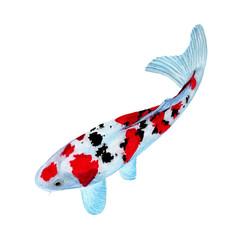 Koi Carp fish Watercolor painting isolated. Watercolor hand painted Koi Carp fish illustrations. Koi Carp fish isolated on white background