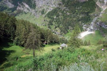 Valley with pine forest view near Zermatt, Switzerland