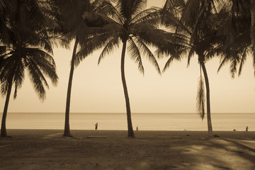 Coconut tree on the beach with vintage effect.