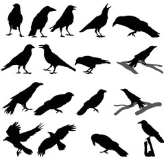 a collection of silhouettes of birds, crows