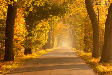 Beautiful, colorful autumn road. Pomerania, Poland