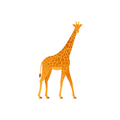 Giraffe. Vector. Animal of Africa. Wild nature. Tropical fauna isolated in flat design. Zoo mammal on white background. Cartoon Illustration.