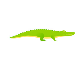 Crocodile. Vector. Alligator reptile in flat design. Wild fauna isolated. Zoo animal on white background. Cartoon Illustration.