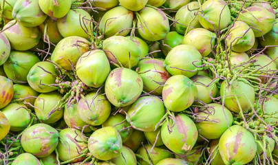 Many young green coconut fruit that have more delicious coconut juice.