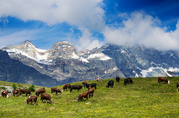 Mountain landscape, some cows grazing in a cloudy day