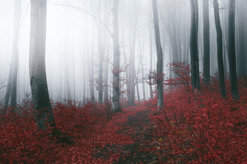 Romantic trails in foggy forest during moody autumn day