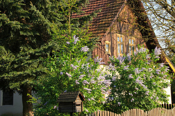 Spring in Spreewald, Leipe, historic village, Germany