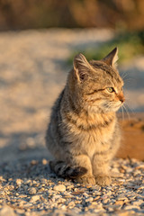 Cute stray kitten sitting on the ground. Blurred background.