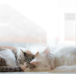 two cute sleeping cat cuddling together