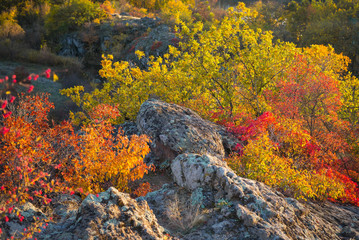 colored bushes on the rocks in autumn day in Ukraine