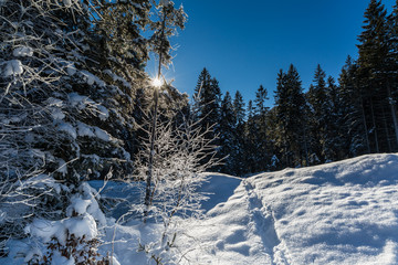 cold sunny winter scene with snow covered branches and forest
