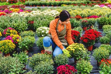 Florist in greenhouse