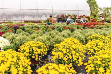 Florist in flower field