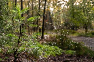 Fresh green little fir tree under a gigantic big tree shines in it. sunlight