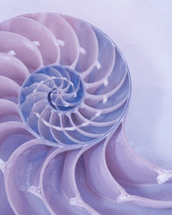 Extreme closeup of a cross section of a Nautilus shell in pastel pink and blue colors