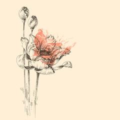 Fototapete - Roses vector sketch, beautiful artistic greeting card