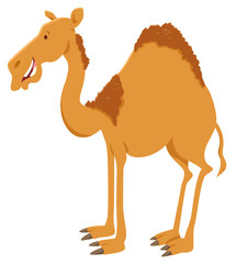 dromedary camel cartoon animal character