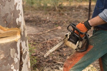 Lumberjack with chainsaw cutting tree trunk in forest