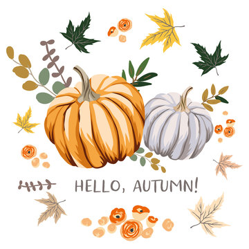 Hello Autumn design template print with orange, gray pumpkins, maple leaves. Vector Halloween illustration. October harvest background. Organic vegetable garden food. Nature design. Fall season