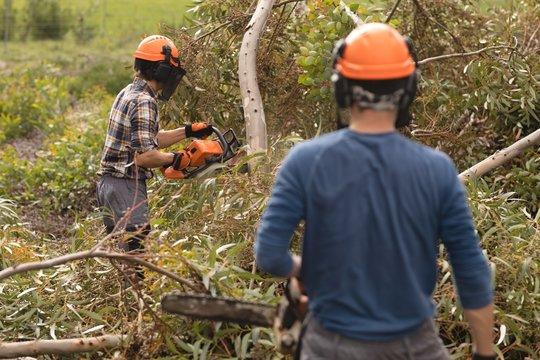Two lumberjacks with chainsaw cutting fallen tree