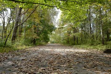 A park where autumn begins