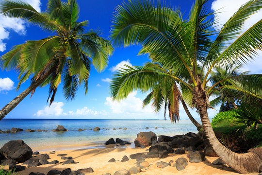 Palm trees in Kauai Hawaii in the morning