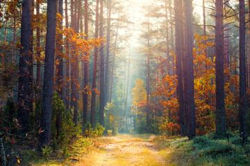 Aluminium Prints Autumn Sunny autumn forest