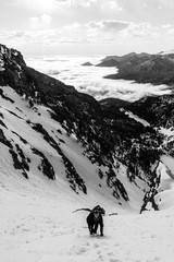 Fototapete - Climbing a Steep Snow Route
