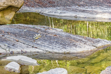 Reflection of autumn forest in a mountain stream, close-up