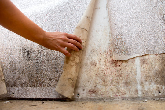 girl found mold in the corner of your bathroom , in your residential building after renovation