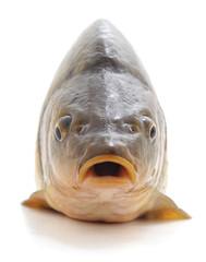 Big fresh carp.