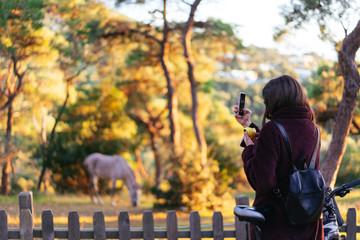 Girl take a photo of a white horse