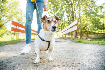 girl is walking the dog on a leash in the city park, legs in jeans, the railing of the red bridge behind, the dog is standing on the sandy path and looking with curiosity and interest