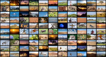 A variety of images of Landscapes and Animals as a big image wall, documentary channel