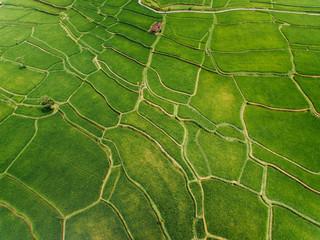 Amazing aerial shot of rice farming