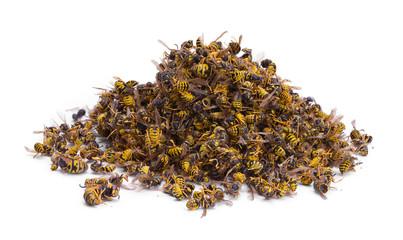 Bee Pile
