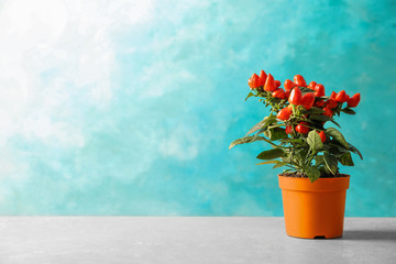 Potted chili pepper plant on table. Space for text