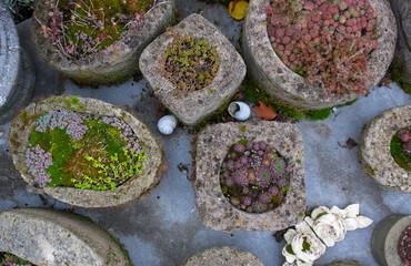 Sammlung verschiedener immergrüner Pflanzen und Sukkulenten im Garten auf dem Tisch in selbstgemachten Betongefäßen mit diversen Dekorationen wie Schneckenhäusern im Herbst