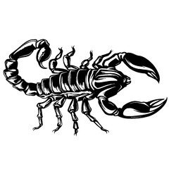 vector of a Scorpion illustration on isolated background