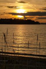 Canvas Prints Honey Silhouette grass along shore