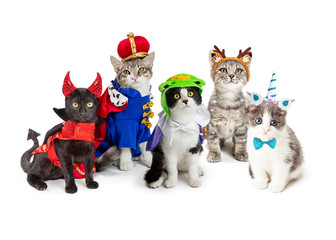 Group of Kittens Wearing Halloween Costumes