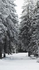 snowscape down trail