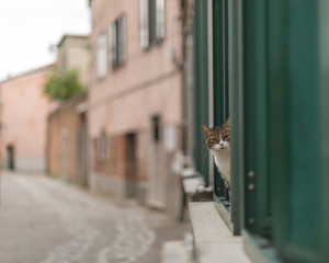 Canvas Prints Narrow alley Cat looking from the window