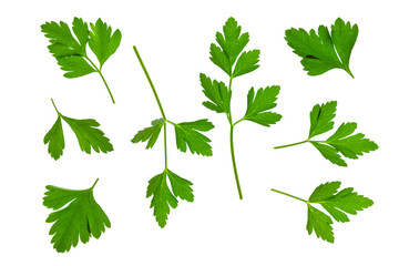 fresh garden parsley leaves on white background